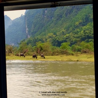 Water buffalos on the Li River, Guanxi, China © Travelwithmk.com